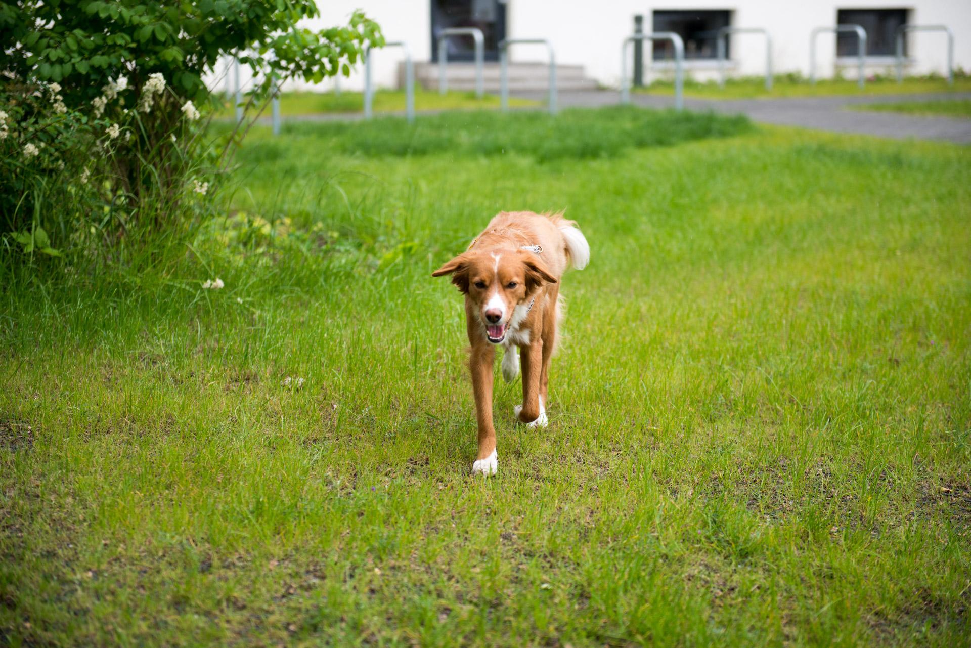 Hund auf Rasengitterfläche